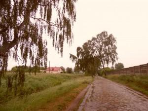 SAM_2669