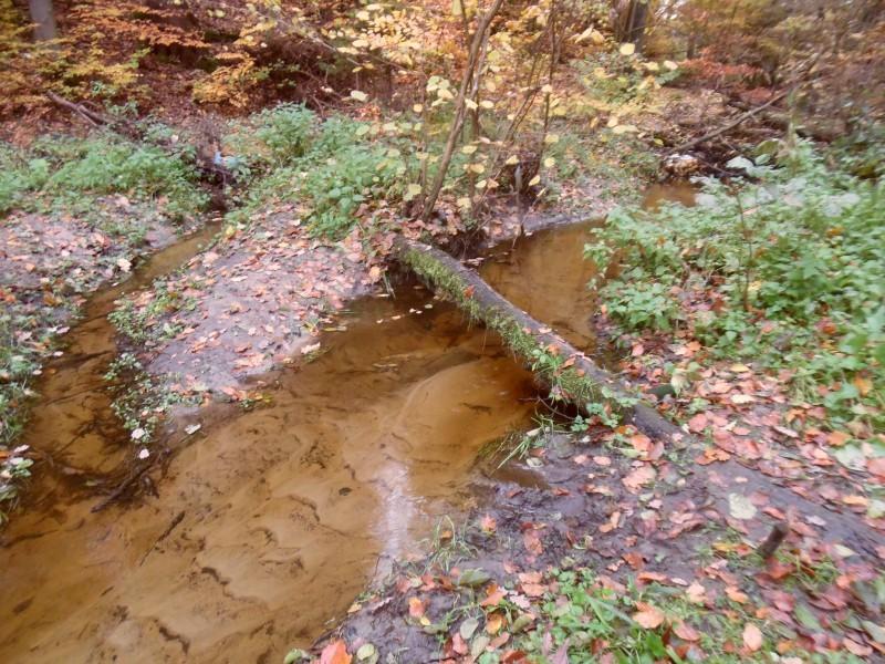 Na leśnym odcinku do Kaczej uchodzi kilkanaście nienazwanych cieków wodnych