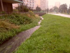 Potok płynie wartko jedynie po obfitych opadach